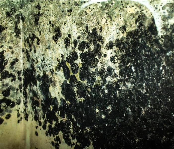 Mold Infected Water Heater Storage