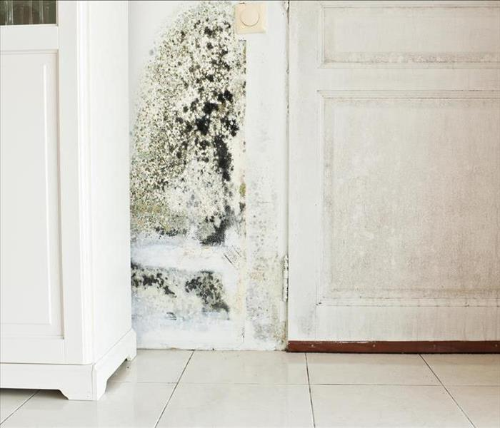 Mold Remediation IICRC Principles Used To Combat Mold Damage Situations In Your Carmichael Home
